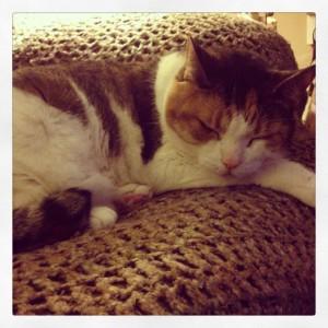 Buttons ~ The Ferocious Cat