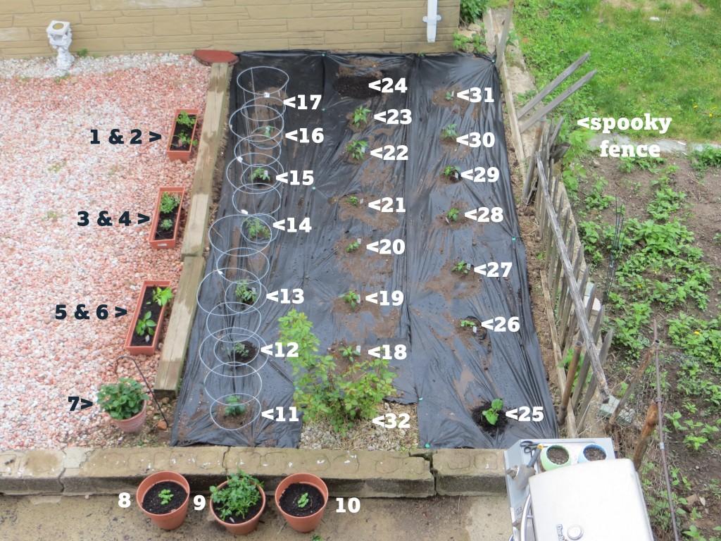 Garden Pick #